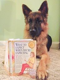 pregnancy announcement ideas with dogs - Google Search
