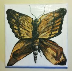 This canvas features one moth creature made of pressed petals and acrylic black paint. The petals are LA lilies and Xmas lilies. This is finished with clear varnish to seal and preserve the flowers. Canvas size approx: x Flower Petals, Flowers, Lilies, Preserve, Canvas Size, Moth, Seal, My Etsy Shop, Creatures