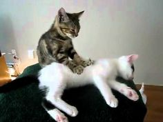 You hold a lot of tension in your low back. Maybe you should cut back on the catnip.