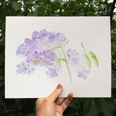 This is a lovely and very popular print based on my original 'Lilacs' watercolor. Lilacs are one of my very favorite garden residents. I love the look of them and I love to bury my nose in them each t
