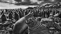 Sebastião Salgado: um dos melhores fotógrafos do mundo mostra em Portugal os confins do planeta