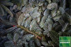 Met een mooi tafelkleed, dennentakken en mooie waxinelichthouders is jouw dinertafel binnen een handomdraai klaar voor de kerst! Amsterdam, Plants, Plant, Planets