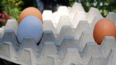 Lidlin munantoimittaja: Jos kaikki suomalaiset ryntäisivät ostamaan luomu- ja lattiakananmunia seurauksena olisi munapula Lidl, Eggs, Egg, Egg As Food