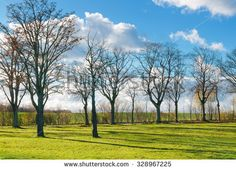 Meadow land with leafless trees on a sunny winter day in North Germany - stock photo