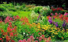 Beautiful Flowers Garden