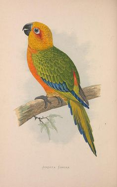 n99_w1150 by BioDivLibrary, via Flickr