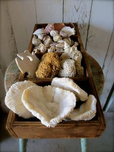 Nice display of treasures from the sea in an old wooden box