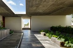 cc arquitectos / next vegetales, león de los aldama guanajuato