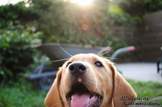 My dog 2011