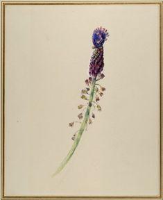 Ruskin, John - Asphodel ('Wild Hyacinth of Jura') What Is Evil, Drawing School, John Ruskin, English Artists, Pre Raphaelite, Drawing Websites, Writing Styles, Italian Art, Outsider Art