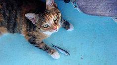 Elle navigue sur un voilier en compagnie de... son chat !