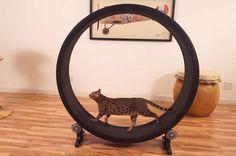 Kitty Hamster Wheel
