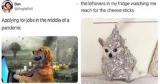 Delivery! Come get your fresh hot doggo memes! Perfectly perfect in every way, shape, and form!#dogs #funnydogs #dogmemes #funnymemes #animalmemes Animal Quotes, Animal Memes, Bananas For Dogs, Cat Memes, Funny Memes, Pet Grief, Dog Rates, Image Memes, Dogs And Kids