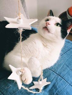 sterren van witte klei Ornament, Cats, Animals, Decoration, Gatos, Animales, Animaux, Animal, Cat