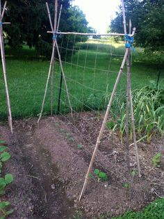 hurlock-net-trellis- Can't wait till my bamboo gets big enough to use the canes!