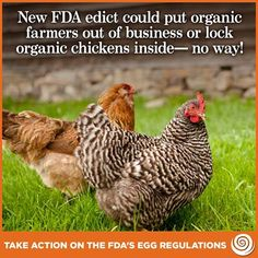 New FDA Edict Could Put Organic Farmers Out Of Business Or Lock Organic Chickens Inside. More Here: http://www.cornucopia.org/food-safety