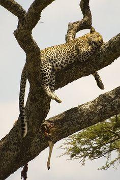 Serengeti National Park (Tanzania)