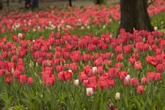 Caitlin Harris Photography | Cheekwood in Bloom