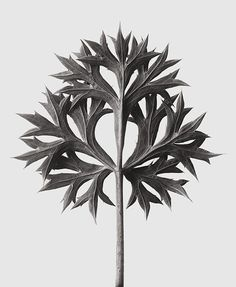 Karl Blossfeldt's botanical studies, made to teach drawing to art students, have been celebrated since the 1920s. A new book collects these perennial favorites.
