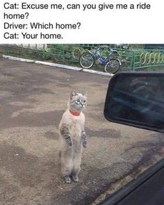 Funny Animal Jokes, Funny Animal Videos, Funny Animal Pictures, Cute Funny Animals, Animal Memes, Funny Cute, Funny Photos, Hilarious, Really Funny Memes