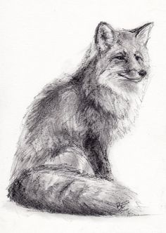 ORIGINAL A4 Charcoal Drawing of a FOX by by BelindaElliottArt