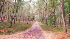Bos bij de Veluwezoom – wandeling Laag-Soeren – HappyHikers Wanderlust, Hiking, Country Roads, Travel, Walks, Viajes, Destinations, Traveling, Trekking
