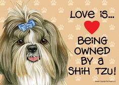 Macy is my Shih-Tzu dog and this is so true! She is so loveable!