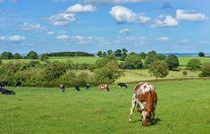 ¿Por qué es una buena opción el turismo rural?
