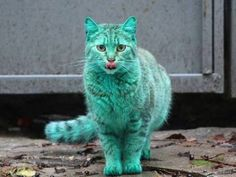 This Mystery Behind This Green Bulgarian Cat May Finally Be Solved