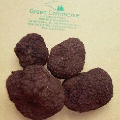 Best italian truffle