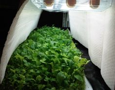 vertical farm white LED
