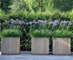 Tongue & groove cedar planters: De Rooy Hoveniers: Klanten en hun tuin Tongue & groove cedar planters: De Rooy Hoveniers: Customers and their garden Cedar Planters, Wooden Planters, Planter Boxes, Container Plants, Container Gardening, Back Gardens, Outdoor Gardens, Agapanthus, Dream Garden