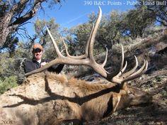 Big elk - OUTDOORSMAN.com