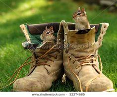 ooooh, chipmunks!