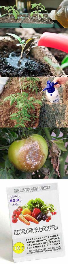 Подкормка томатов йодом - когда и как удобрять томаты?