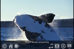 6 Brill-iant Apps for Studying Marine Biology- These apps would be great references to use in the classroom.