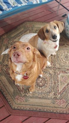 My girls are being especially cute today   http://ift.tt/2oEUoQ5 via /r/dogpictures http://ift.tt/2oEsJP8  #lovabledogsaroundtheworld
