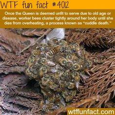 Cuddle Death - Sucks to be the Queen! - WTF!?! Weird and not-so-fun facts