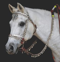 bridles for horses | ... USA, with the 'Arabian knight bridle', photo copyright Kenna Al-Sayed