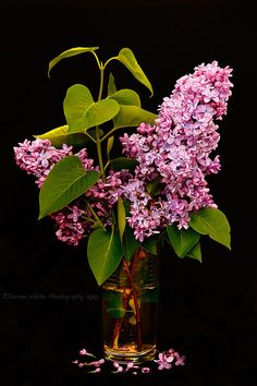 lilacs - the backyard always smelled so good in May!