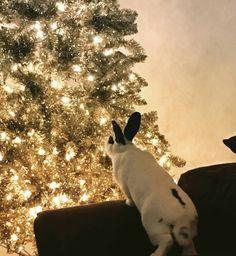 Merry Christmas, Sir Hopsalot.