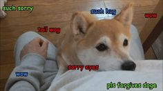 Doge is sorry - 9GAG