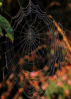 Spider's web with rainbow effect