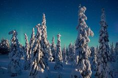 Moonlight on Spruce Trees, Oulanka National Park, Finland  by Peter Essick https://www.facebook.com/144196109068278/photos/pb.144196109068278.-2207520000.1419294378./256864801134741/?type=3&theater