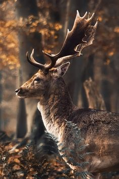 Magnificent buck