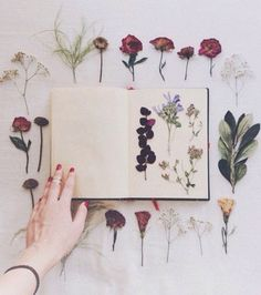 Male your own herbarium Art Floral, Scrapbooking Diy, Hobbies For Women, Cheap Hobbies, Deco Originale, Nature Journal, Garden Journal, Handmade Home, Dried Flowers