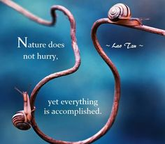 Taoist Proverb from Lao Tzu: Nature does not hurry ...