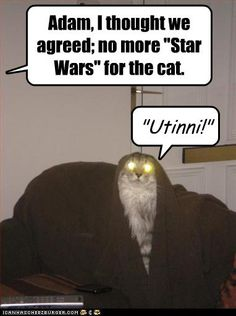 Adam, I thought we agreed; no more Star Wars for the cat. Utinni!