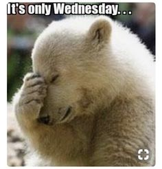 Its only Wednesday quotes quote days of the week wednesday hump day wednesday quotes happy wednesday wednesday morning Funny Wednesday Memes, Wednesday Hump Day, Wednesday Coffee, Wednesday Sayings, Funny Monday, Thursday, Yearbook Memes, Yearbook Ideas, Yearbook Design