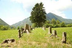 #parconaturale #prealpigiulie #friuliveneziagiulia #montagne #mountains #natura #nature #italy #canon #fotografia #photography #photoshop #focus #alberi #tree #flora